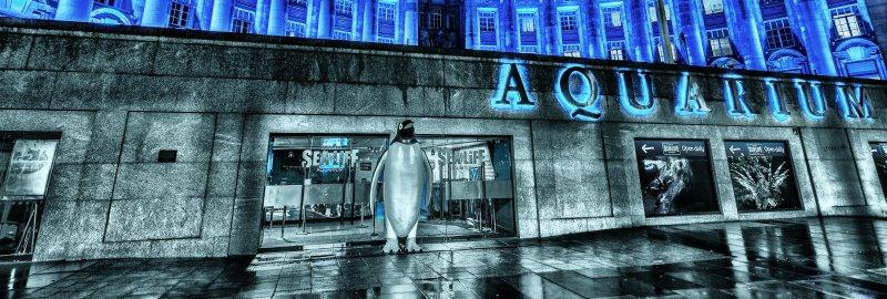 London Aqarium 1